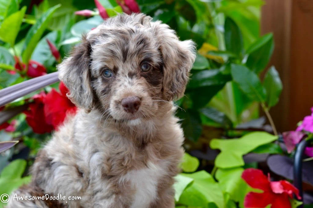 Pick Your Dog Breed Series Of Questions
