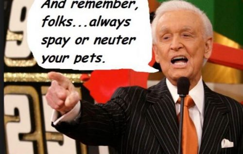 spay and neuter your pets