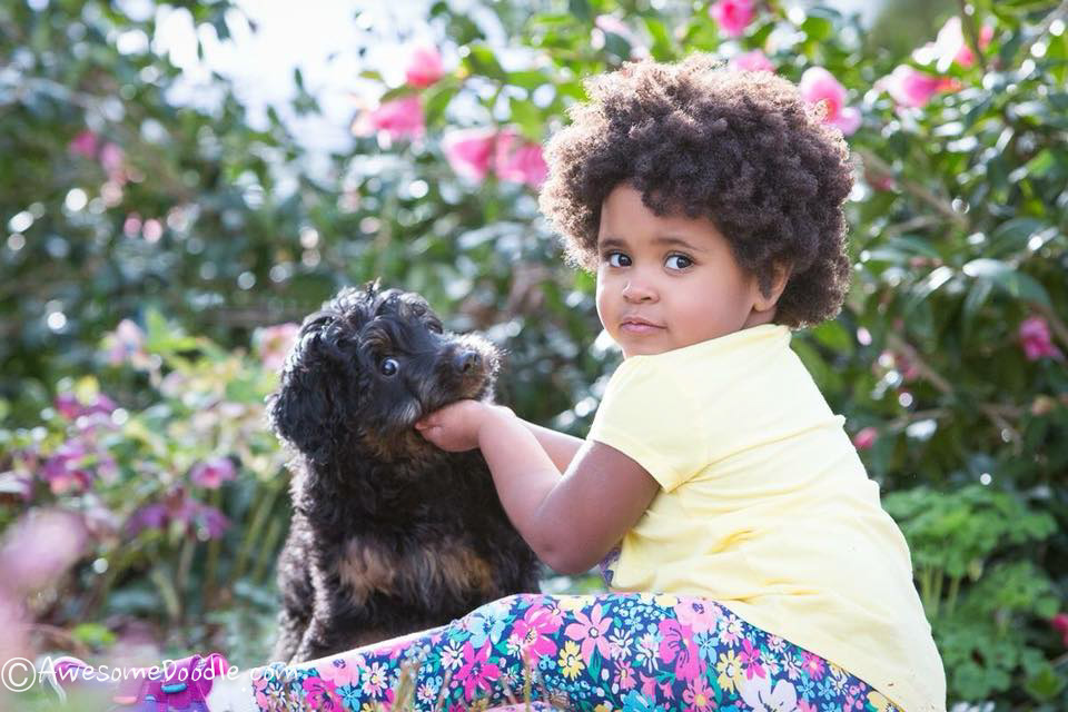 aussiedoodlepuppy with a baby
