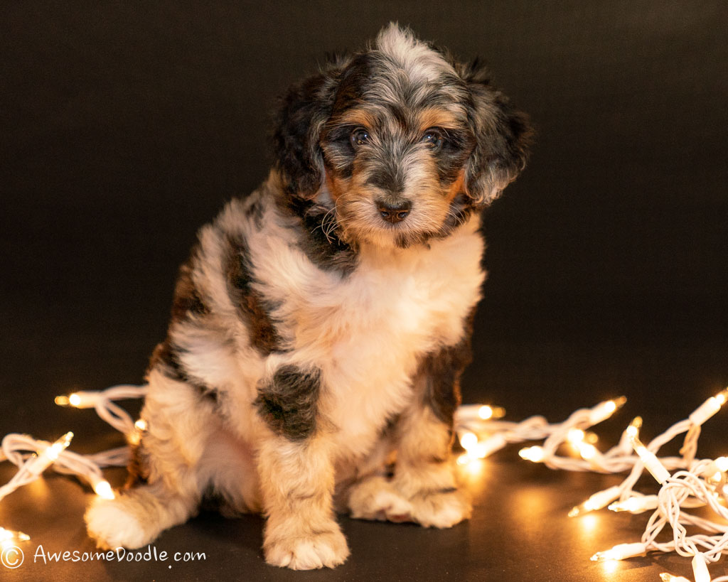 puppy photoshoot