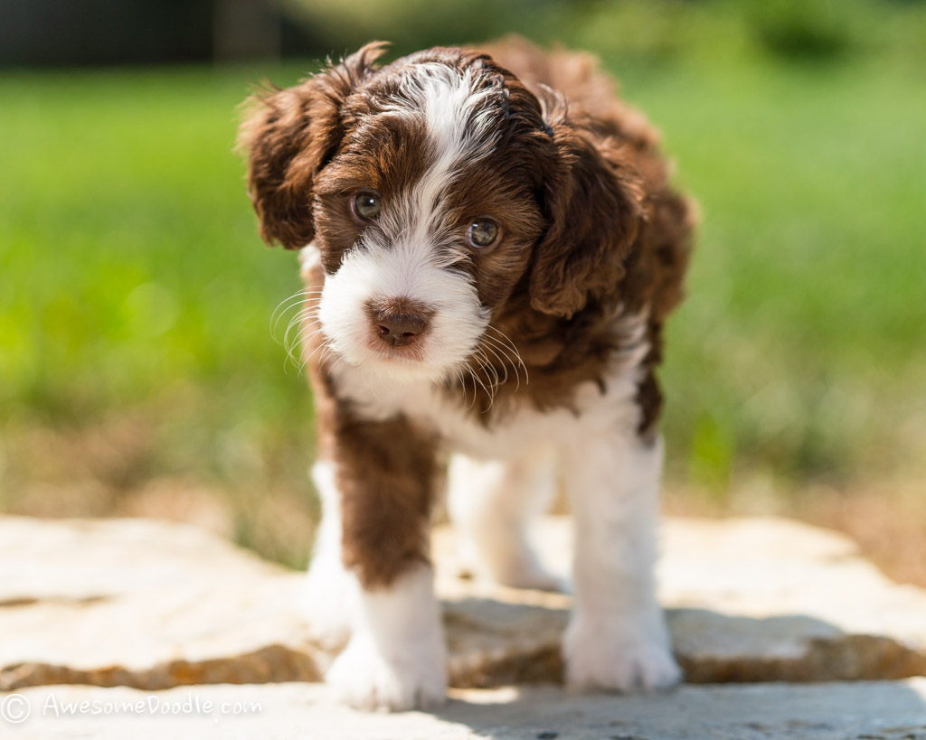 cutest puppy pictures