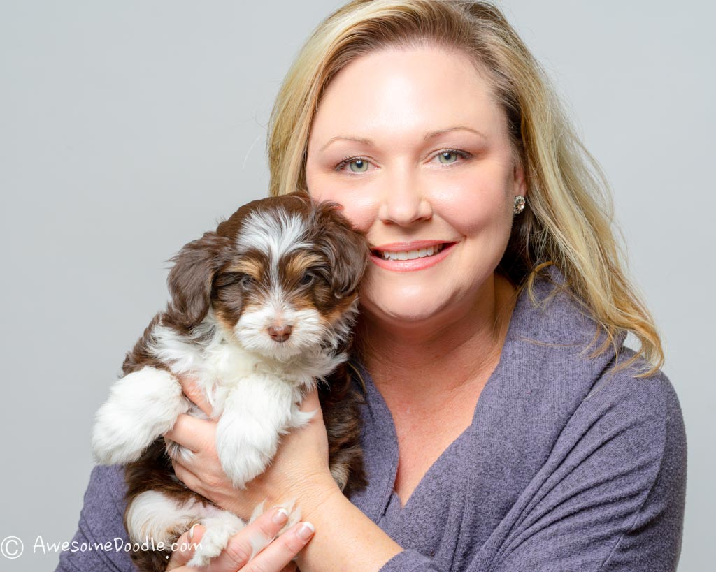 Best Aussiedoodle Breeders List In The Usa From Our Home To